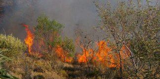 φωτιά Λακωνία